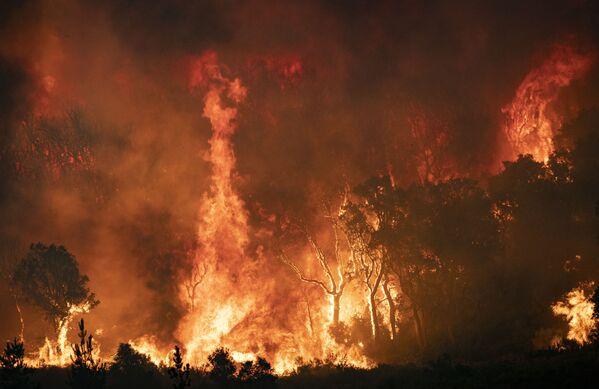 Snímek pořízený 15. srpna zachycuje hořící lesy v postižené oblasti. - Sputnik Česká republika