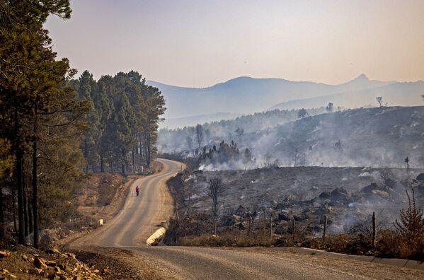 Obyvatel kráčí po spálené lesní oblasti, 16. srpna 2021. - Sputnik Česká republika