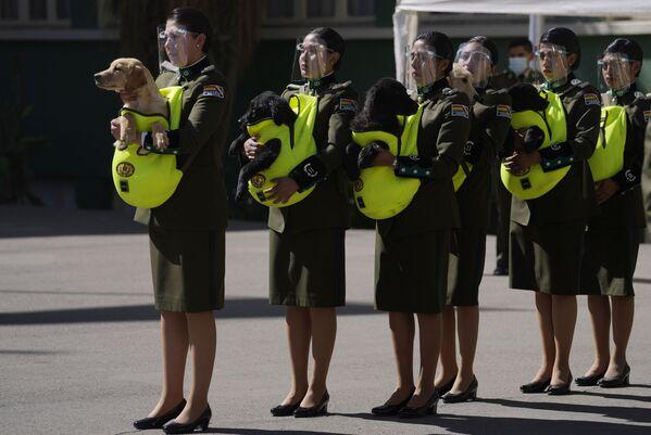 Policie předávají štěňata k výcviku během ceremoniálu na Národní policejní akademii v La Paz v Bolívii - Sputnik Česká republika