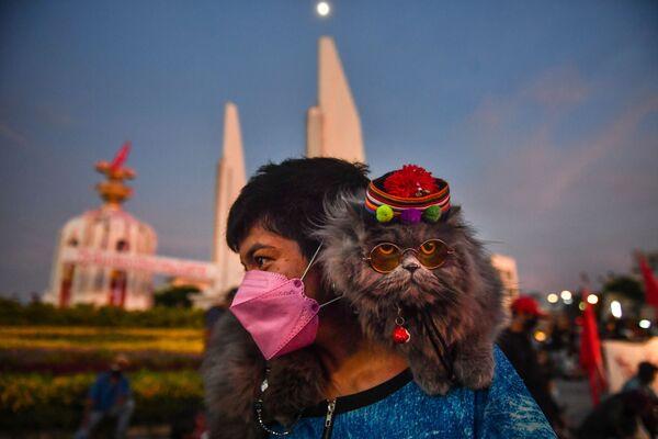 Kočka na rameni demonstranta během protestu požadující rezignaci thajského premiéra v Bangkoku - Sputnik Česká republika