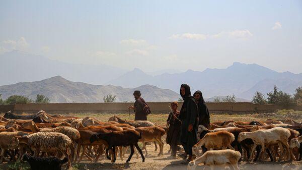 Афганские пастухи пасут овец рядом с авиабазой в Баграме - Sputnik Česká republika