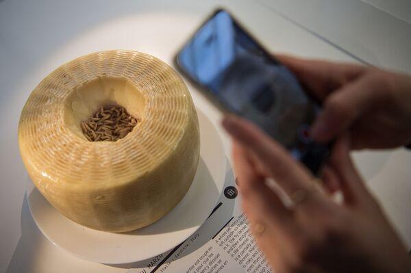 Сыр касу марцу в музее Disgusting Food во Франции  - Sputnik Česká republika