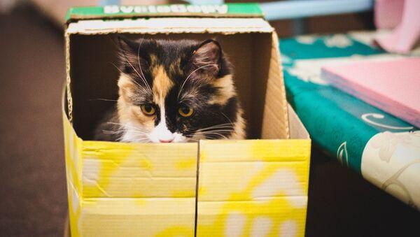 Kočka v krabici - Sputnik Česká republika