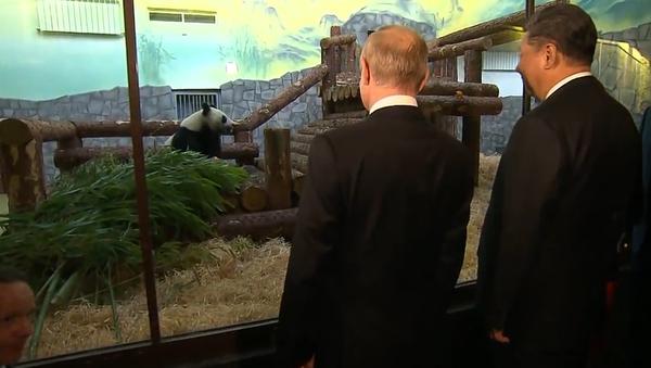 """Čínská """"diplomacie pandy"""" během statní návštěvy v Rusku. Co znamená dárek Si Ťin-pchinga Putinovi? (VIDEO) - Sputnik Česká republika"""