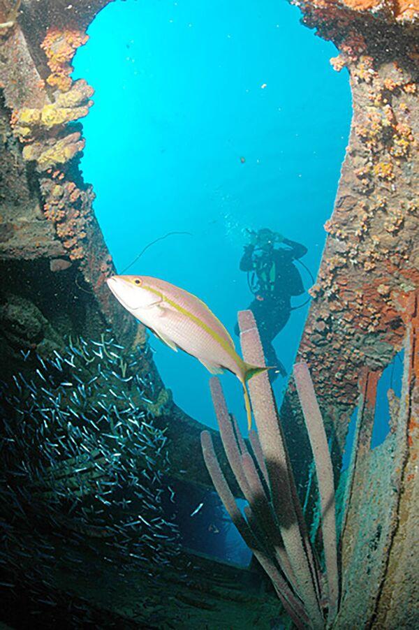 Potápěč na korábu Hilma Hooker, Bonaire. - Sputnik Česká republika