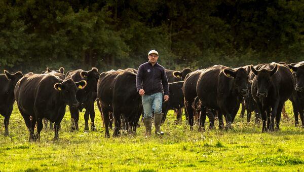 Majitel farmy MCH Angus Robert W.L. van Es  - Sputnik Česká republika