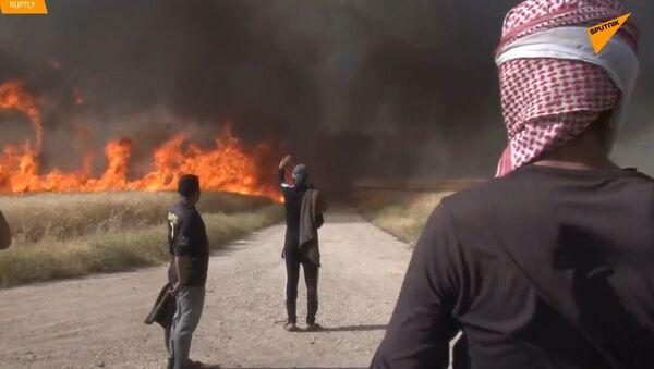 Požáry, které spalují hektary zemědělské půdy v Sýrii, se mohou rozšířit až do ropných zařízení - Sputnik Česká republika
