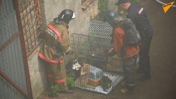 300 koček a 7 psů bylo zachráněno z hořícího útulku v Petrohradě - Sputnik Česká republika