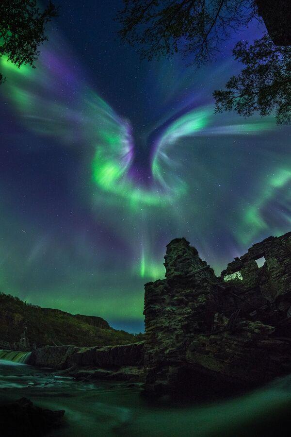 Snímek Aurora is a Bird rakouského fotografa Alexandra Stěpaněnka. - Sputnik Česká republika