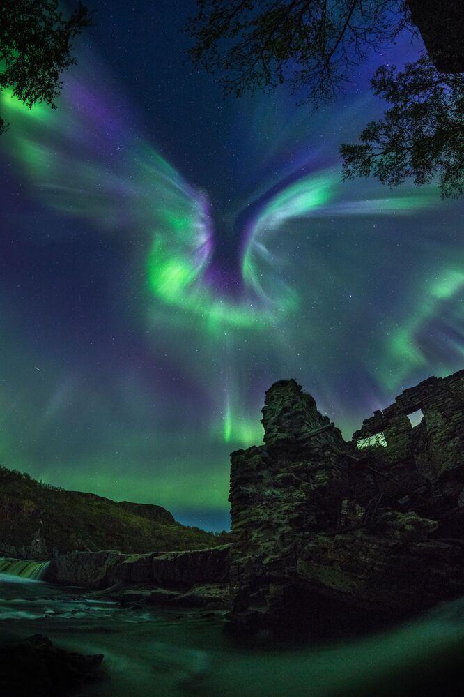 Snímek Aurora is a Bird rakouského fotografa Alexandra Stěpaněnka.