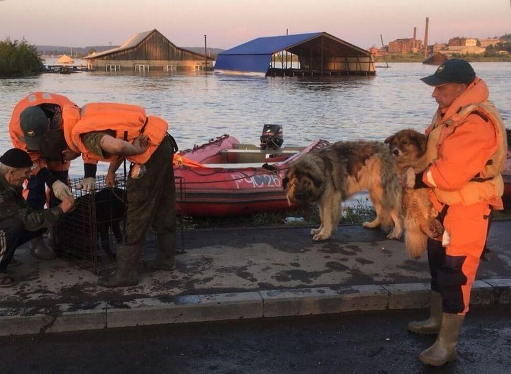 Členové pohotovostní služby evakuují psy v záplavové zóně v Irkutské oblasti.