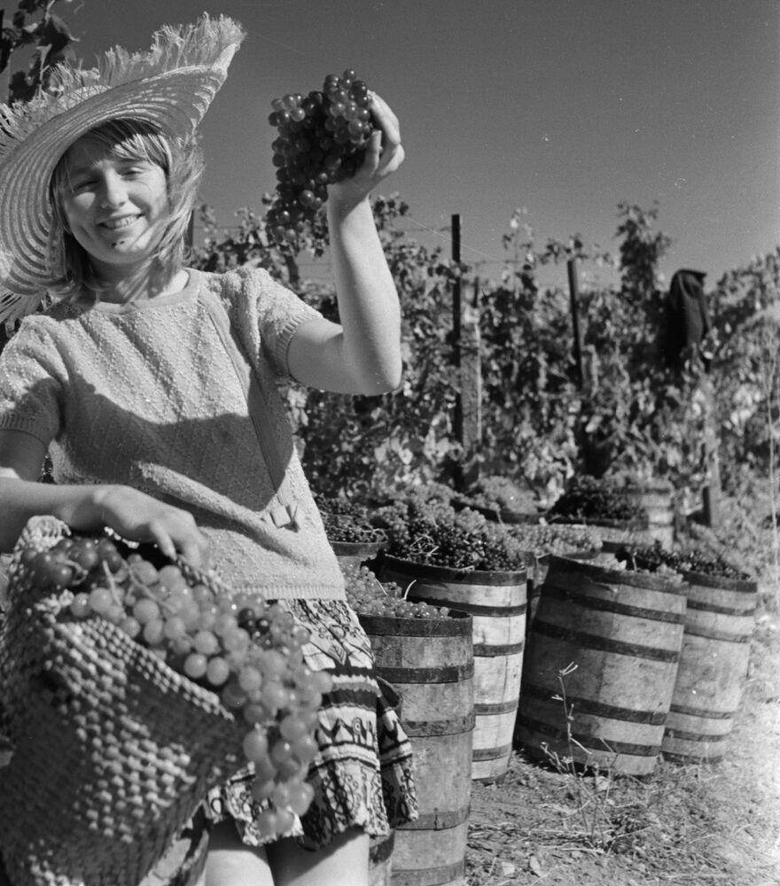 Sklizeň hroznů v Gurzufu, 1969.