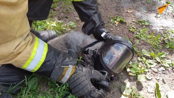 V ruském Tomsku bylo přivoláno 26 hasičů, aby z hořícího domu zachránili kočku a psa  - Sputnik Česká republika