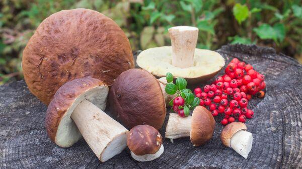 Houby a lesní plody. Ilustrační foto - Sputnik Česká republika