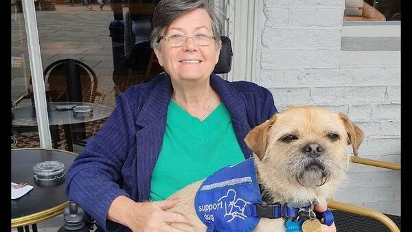 Malý mops se stal velkým pomocníkem pro ženu na invalidním vozíku - Sputnik Česká republika