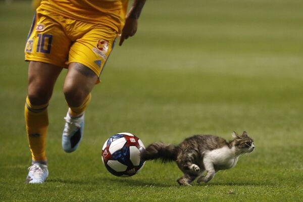 Kocour vyběhl na fotbalové pole během zápasu mezi Tigers UANL a Real Salt Lake na stadionu Salt Lake City v USA. - Sputnik Česká republika