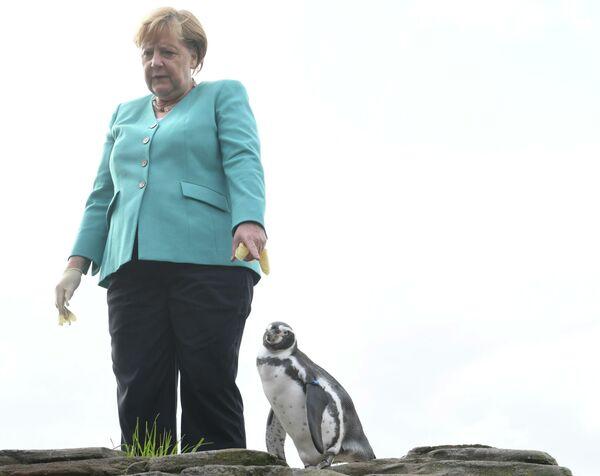 Německá kancléřka Angela Merkelová krmí tučňáky ve Stralsundu, severní Německo. - Sputnik Česká republika