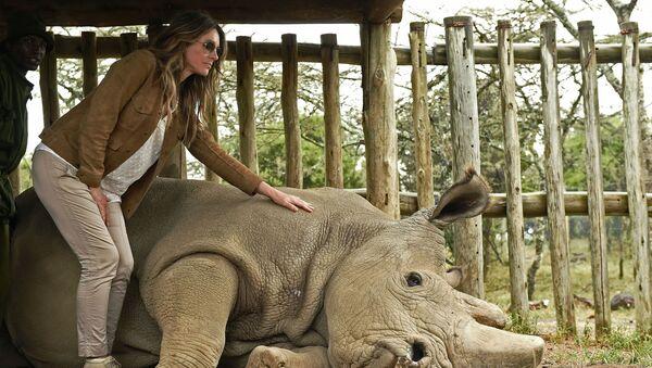 Poslední samec bílých nosorožců na světě, 45 let starý Súdán - Sputnik Česká republika