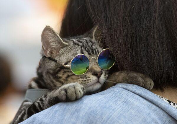 Kočka ve slunečních brýlích na Pet Expo Championship v Bangkoku. - Sputnik Česká republika