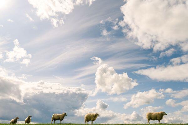Stádo ovcí pod oblohou plnou mraků v Německu. - Sputnik Česká republika