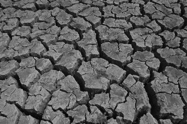Fotografie Dry Land (Mohammad Yeasir Sarowat) - Sputnik Česká republika