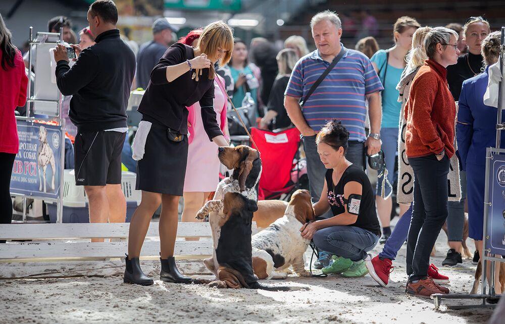 Trénink basetů na Mezinárodní výstavě psů v Minsku