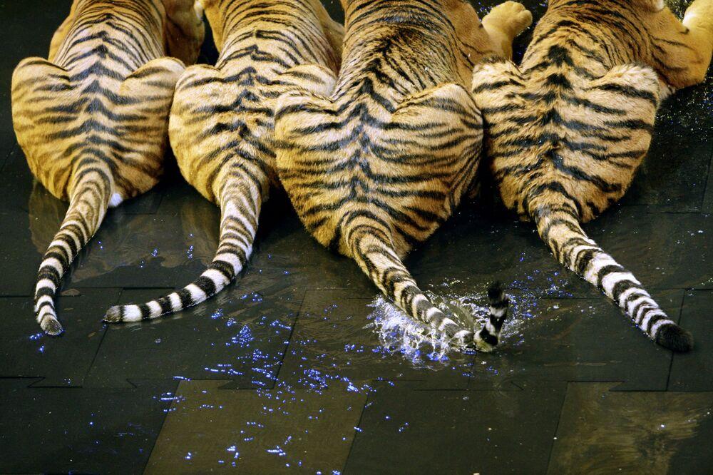 Malá aréna sportovního komplexu Lužniki, v níž má být představena nová show s tygry, rok 2009.