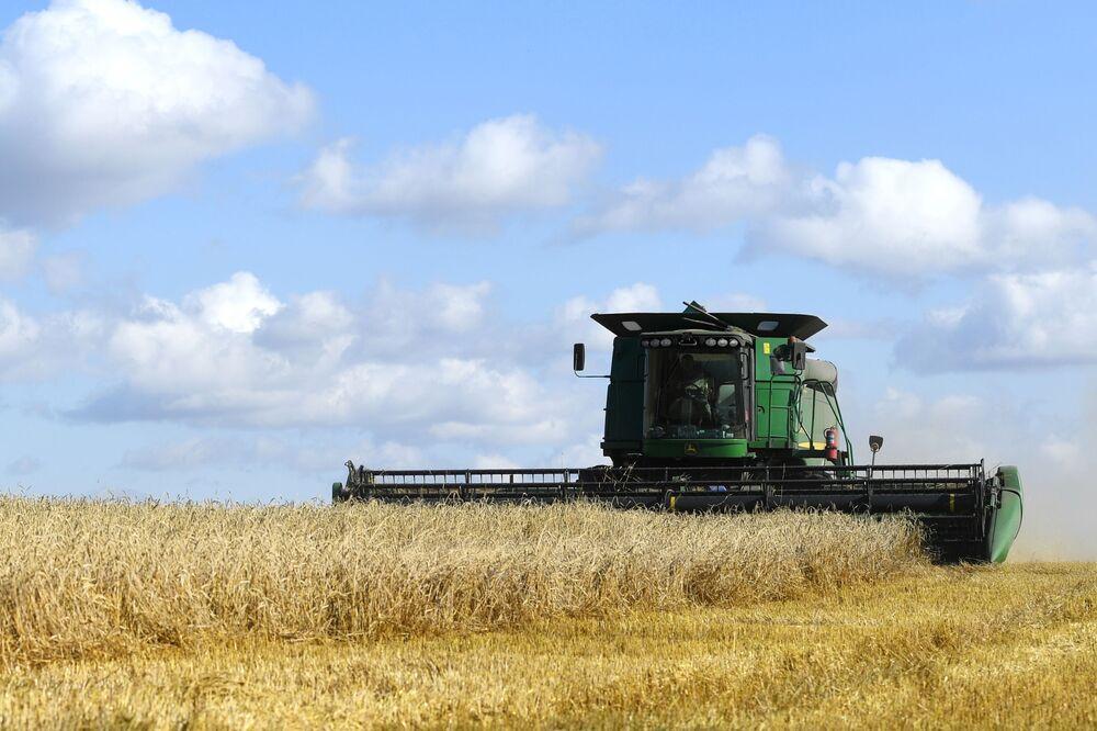 Sklizení pšenice na polích v Čerepanovské oblasti v Novosibirsku.