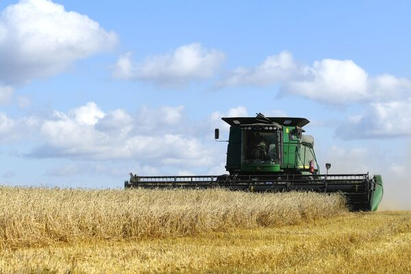 Sklizení pšenice na polích v Čerepanovské oblasti v Novosibirsku. - Sputnik Česká republika