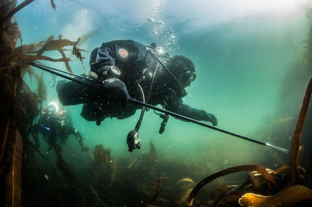 Potápěč zkoumá dno Novokurilského zálivu v Ochotsku u ostrova Urup (ostrov jižní skupiny Velkého pohoří Kurilské ostrovy)