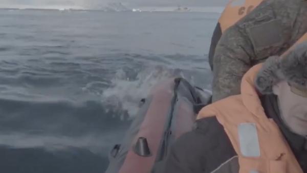 Video: Expedice Severního loďstva RF a Ruské geografické společnosti v Arktidě se snaží ubránit útoku samice mrože - Sputnik Česká republika