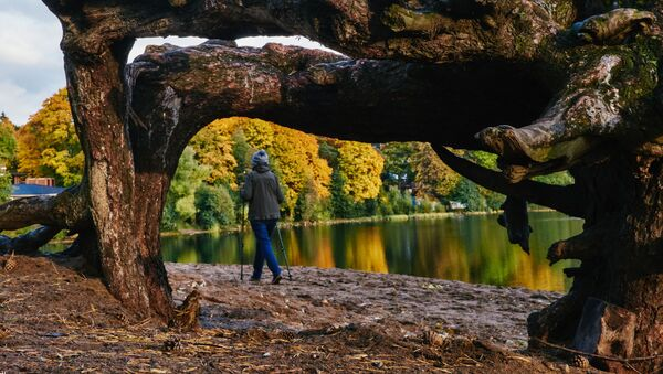 Severská chůze u jezera Suzdal v Petrohradě - Sputnik Česká republika