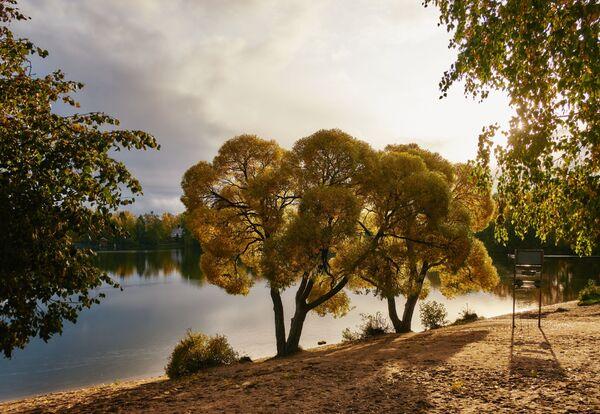 Stromy na břehu Suzdalských jezer v Petrohradě - Sputnik Česká republika