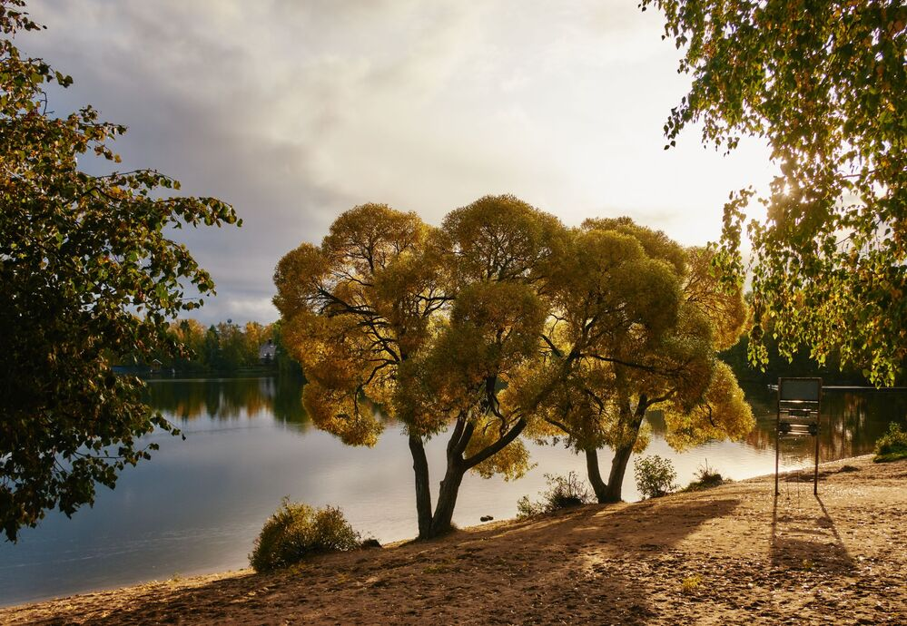 Stromy na břehu Suzdalských jezer v Petrohradě