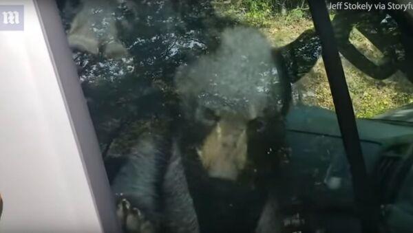 Medvědí mláďata, která uvízla v autě, si pomocí klaksonu zavolala o pomoc majitele auta - Sputnik Česká republika