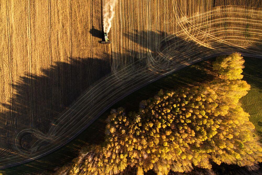 Sklizeň obilí v Novosibiřské oblasti.