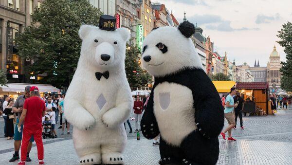 Panda a lední medvěd v centru Prahy - Sputnik Česká republika