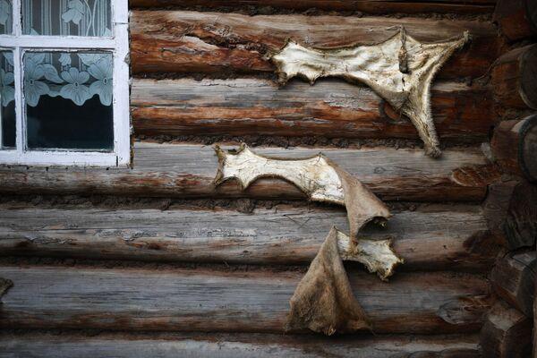 Kůže divokých zvířat na zdi domu - Sputnik Česká republika