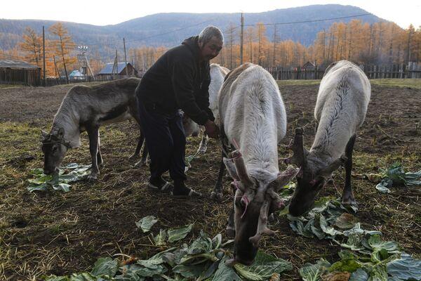 Muž krmí jeleny - Sputnik Česká republika