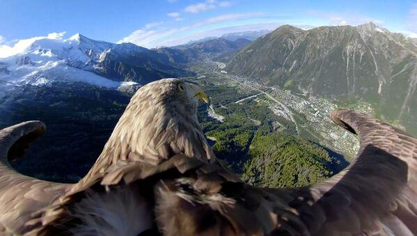 Orel bělohlavý letí nad horami ve francouzském Chamonixu - Sputnik Česká republika