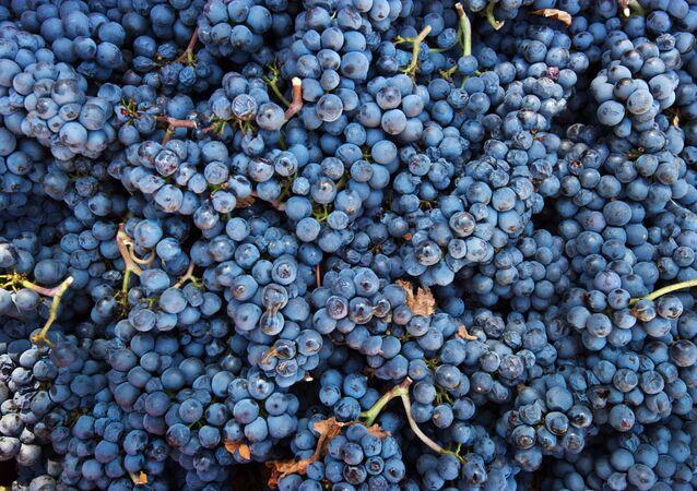 Hroznové vínо