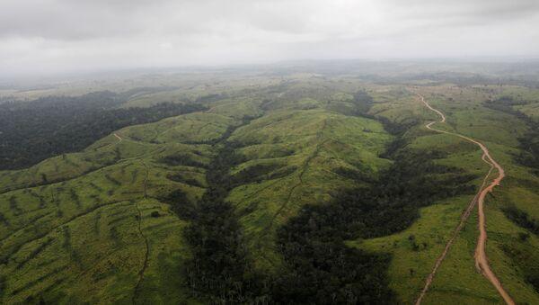 Amazonský prales - Sputnik Česká republika