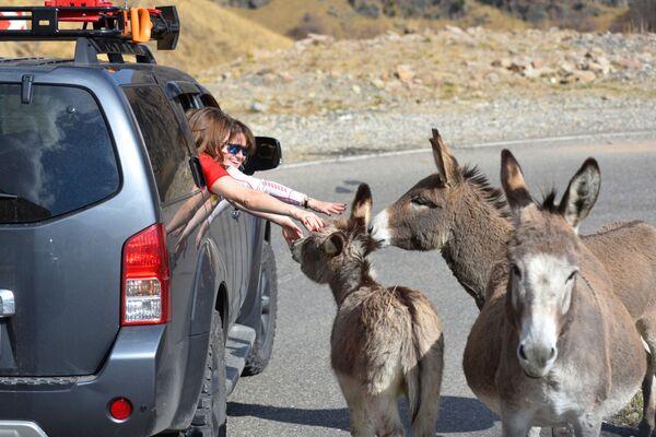 Turisté si hladí osly na silnici Kislovodsk-Džily-Su v Kabardsko-Balkarsku. - Sputnik Česká republika