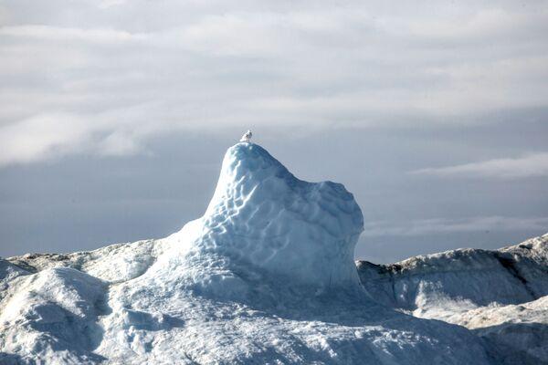 Ptáček sedí na ledovci ve vodách Grónska. - Sputnik Česká republika