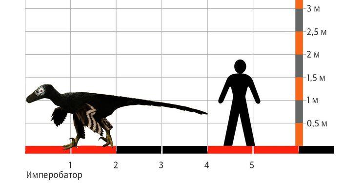 Rozměry Imperobatora hovoří o jeho gigantismu