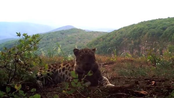 Nejvzácnější kočka na světě se dostala před kameru. Podívejte, co prováděla! - Sputnik Česká republika