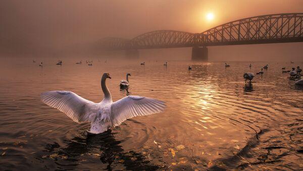 Kouzlo přírody na snímcích vítězů soutěže Nature Photographer of The Year. Čech získal první místo v nominaci Ptáci - Sputnik Česká republika