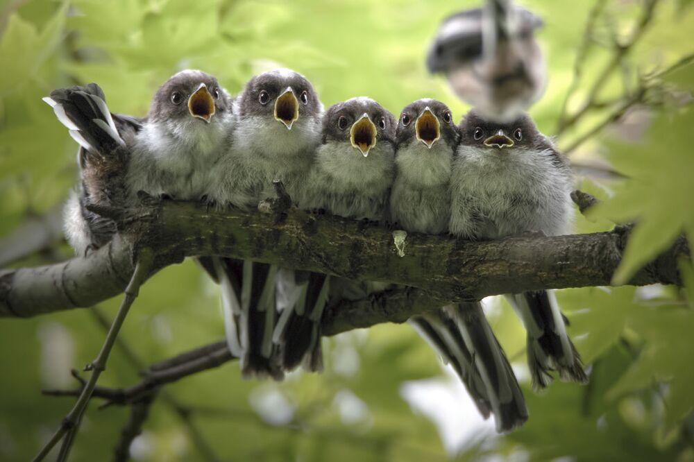 Kouzlo přírody na snímcích vítězů soutěže Nature Photographer of The Year. Čech získal první místo v nominaci Ptáci