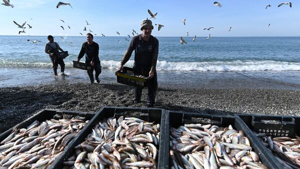 Rybáři vykládají parmice ulovené v Černém moři - Sputnik Česká republika