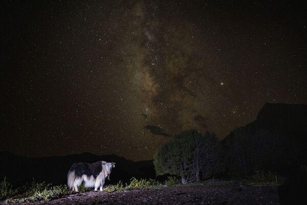 Pohled na Mléčnou dráhu. Národní park Sanjiangyuan v provincii Čching-chaj  - Sputnik Česká republika